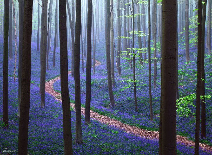 Hallerbos Forest- 13 Gorgeous Landscapes Around The World